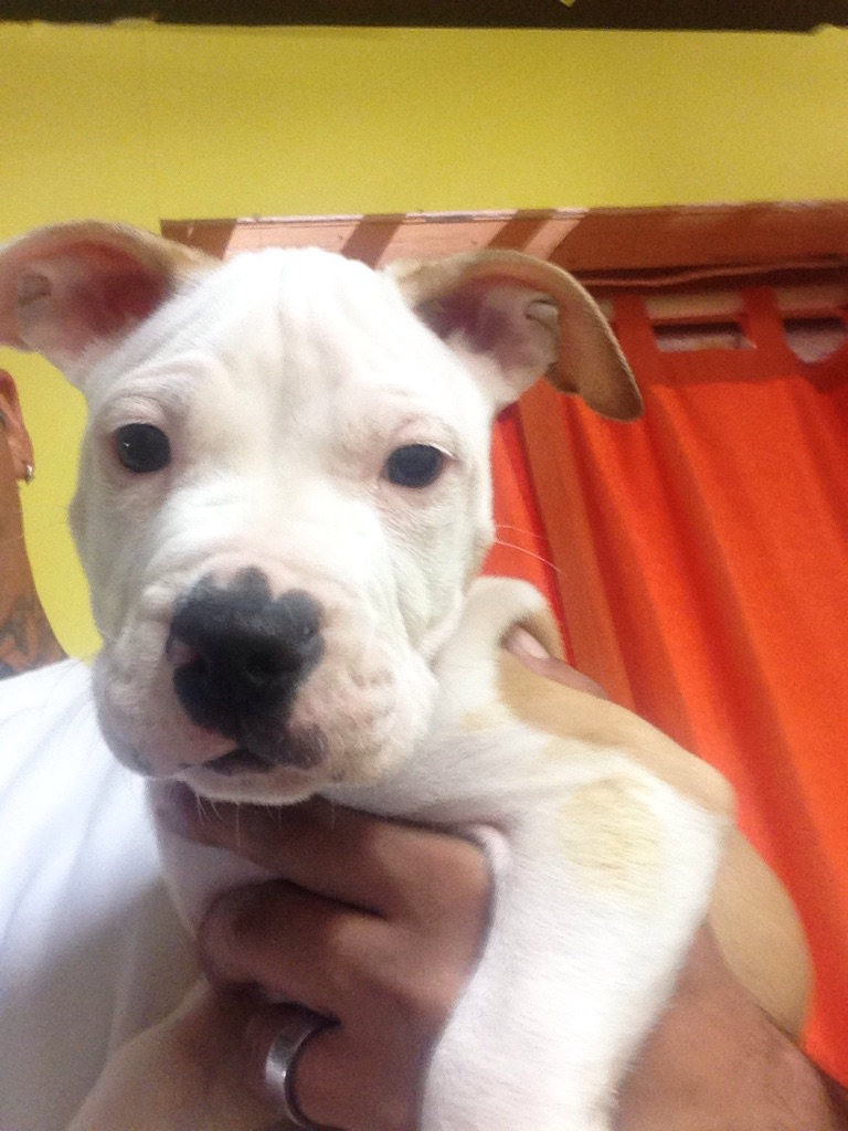 Male Puppies for Sale - Kijiji Edmonton - Bargain Finder :: Used Buy